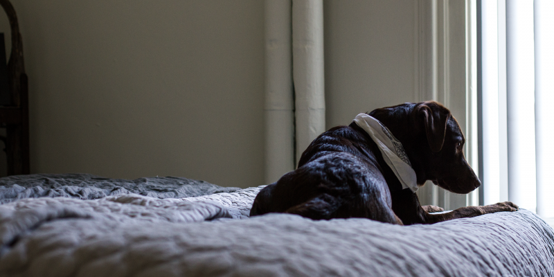 best large dog beds for dogs with hip dysplasia