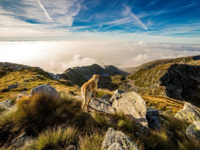 Best Dog Backpack Carriers for Hiking